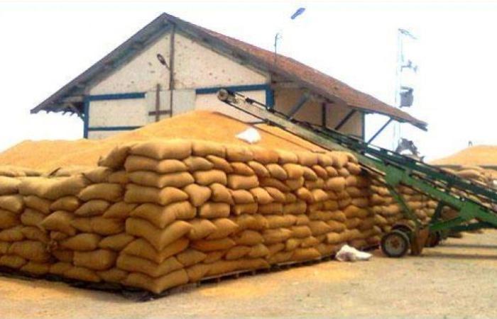 تونس الأن / تجميع 12.6 مليون قنطار من الحبوب