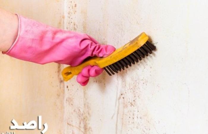 أسباب ظهور عفونة وفطريات على حوائط المنزل وطرق الوقاية منها