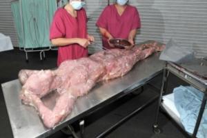 السعودية: مصدر يكشف عن الجثة العارية في أحد أفرع ماكدونالدز بالرياض؟! وصدمة كبيرة تصيب الجميع!